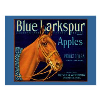 Blue Larkspur Champion Horse Postcard