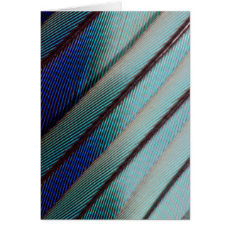 Blue Lilac Breasted Roller feather Card