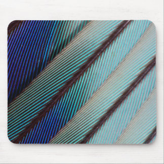 Blue Lilac Breasted Roller feather Mouse Pad