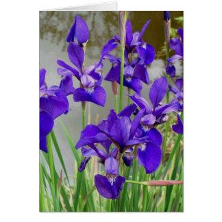 Blue Lilies Card