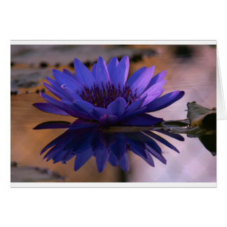 Blue Lily Card