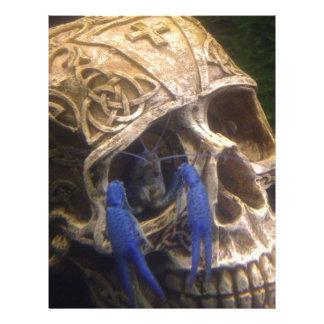 Blue lobster crayfish hanging out in a skull eye letterhead