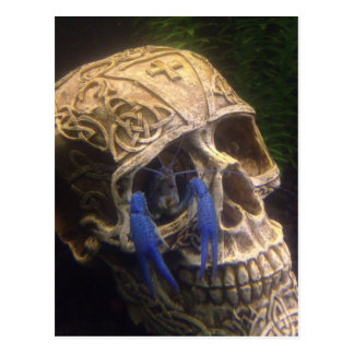 Blue lobster crayfish hanging out in a skull eye postcard