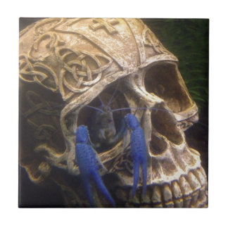 Blue lobster crayfish hanging out in a skull eye tile