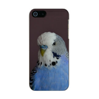 Blue Lovely Budgie Incipio Feather® Shine iPhone 5 Case