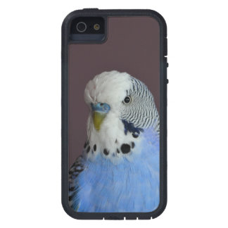 Blue Lovely Budgie iPhone 5 Covers