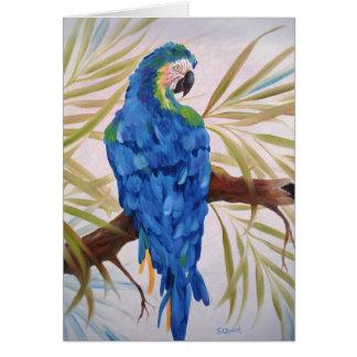Blue Macaw - Blank Card