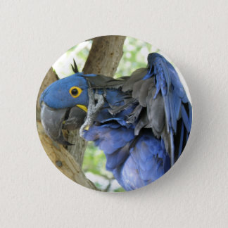 Blue Macaw Button