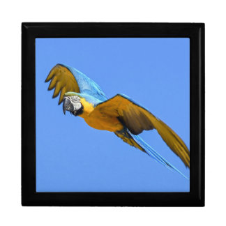 Blue macaw gift box