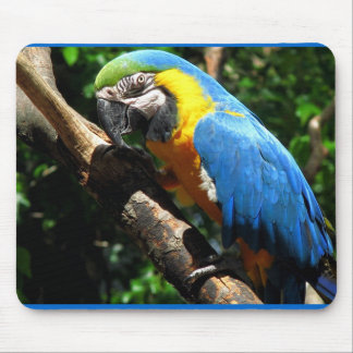 Blue Macaw Mouse Pad