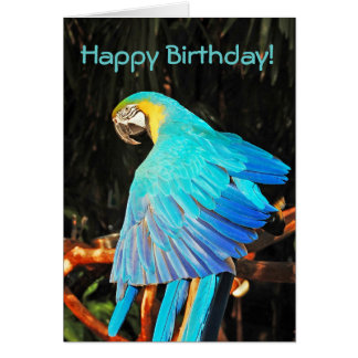 Blue macaw parrot birthday greeting card