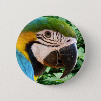 Blue Macaw Parrot Button