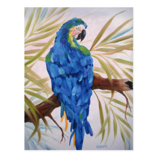 Blue Macaw Post Card