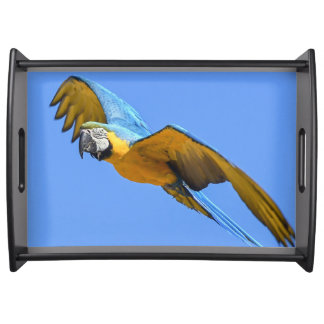 Blue macaw serving tray