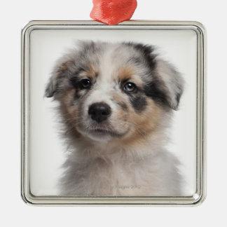 Blue Merle Australian Shepherd puppy close-up Silver-Colored Square Ornament