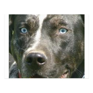 blue merle catahoula.png postcard