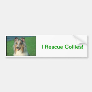Blue Merle Collie Bumper Sticker