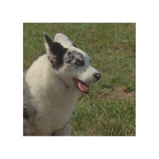 Blue Merle Corgi Dog Wood Print