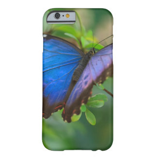 Blue Morpho Barely There iPhone 6 Case