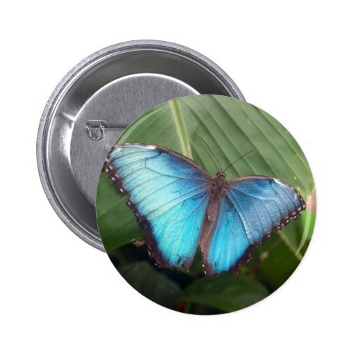 Blue Morpho Butterfly Buttons