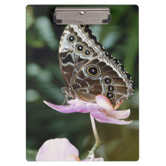 Blue Morpho Butterfly Clipboard