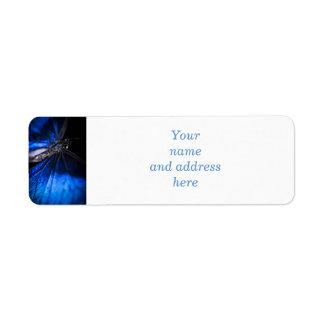 Blue Morpho butterfly closeup Labels