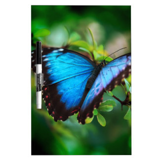 Blue Morpho Butterfly Dry-Erase Whiteboard