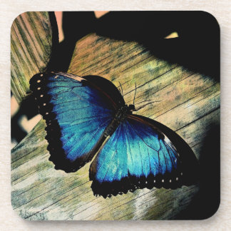 Blue Morpho Butterfly Insect Pretty Coaster