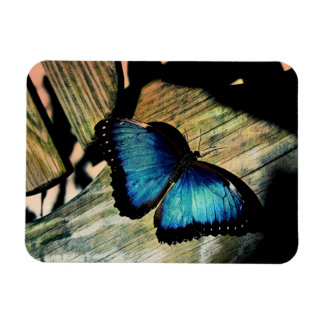 Blue Morpho Butterfly Insect Pretty Magnet