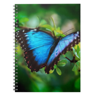 Blue Morpho Butterfly Note Book