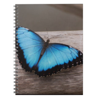 Blue Morpho Butterfly Spiral Note Books