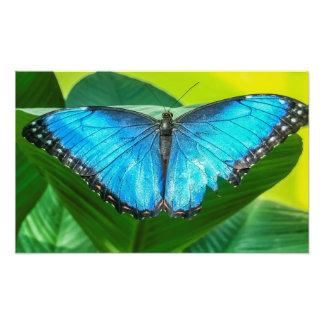 Blue Morpho Butterfly Photo Print