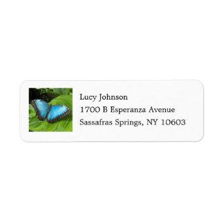 Blue Morpho Butterfly Return Address Labels