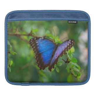 Blue Morpho Butterfly Sleeve For iPads