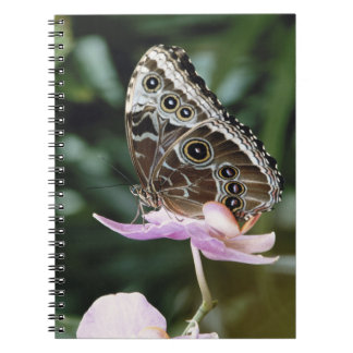 Blue Morpho Butterfly Spiral Notebook