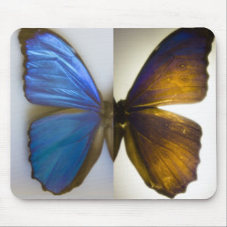 Blue Morpho Butterfly Wings Mousepad Mouse Pad