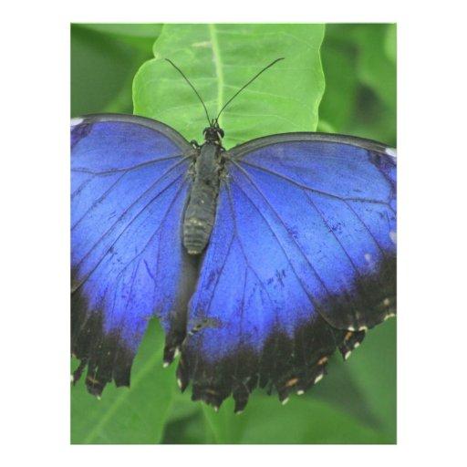 Blue Morpho Personalized Letterhead