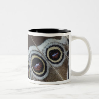 Blue Morpho, Morpho menelaus, adult newly Two-Tone Coffee Mug