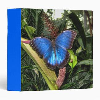 Blue Morpho Peleides Binders