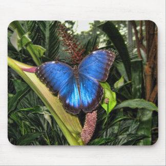 Blue Morpho Peleides Mouse Pad