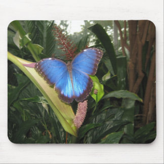 Blue Morpho Peleides Mousemat