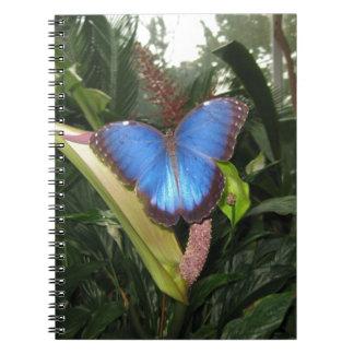 Blue Morpho Peleides Note Books
