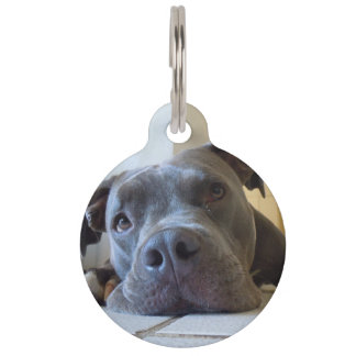 Blue Nose Pit Bull Dog Tag