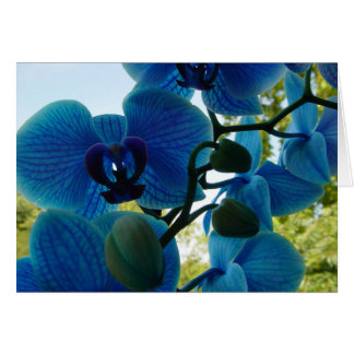 Blue Orchid greeting map with white envelope Card