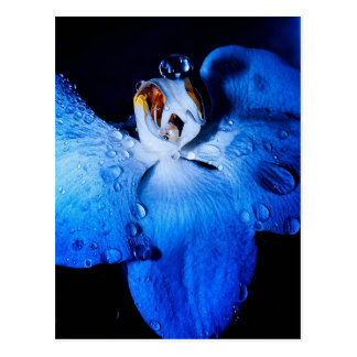 Blue Orchid Postcard