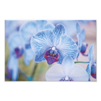 Blue Orchids Photo