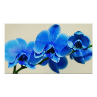 Blue orchids poster