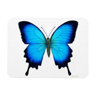 Blue Papilio Ulyssses Butterfly Premium Magnet