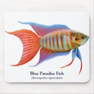 Blue Paradise Fish Mousepad