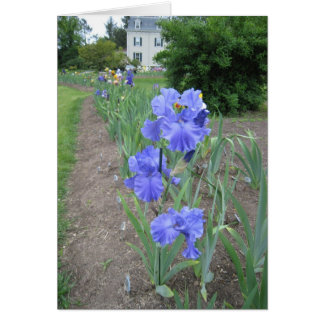 blue path small blank note card